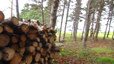 rakás : Wood pile steadicam shot Stock mozgókép