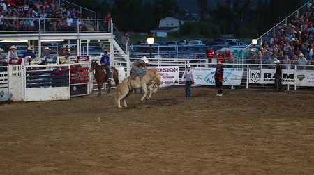 cavalos : cowboy saddle bronc riding in slow motion at a prca professional rodeo