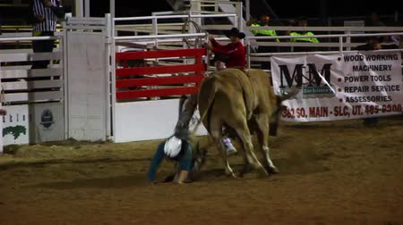 deli : Extreme bull riding at the rodeo