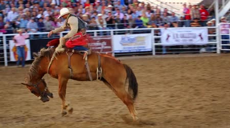 chapéu : Cowboys ride saddleback in a national PRCA rodeo