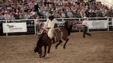арена : Cowboys ride saddleback in a national PRCA rodeo