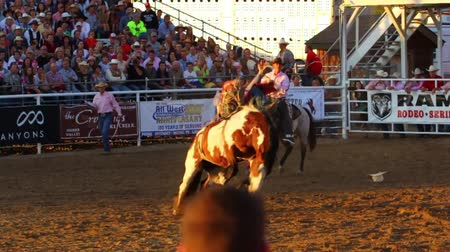 chapéu : Cowboys ride bareback on bucking horses in a small town PRCA rodeo