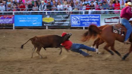 buty : Cowboys steer wrestling at a national PRCA rodeo event