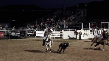 deli : A pair of cowboys team roping Stok Video