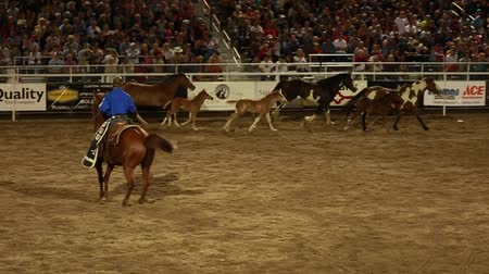 sportowiec : horses running around an arena in slow motion at a rodeo Wideo