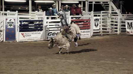 býci : Extreme bull riding at the rodeo