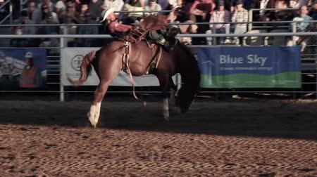 býci : A cowboy riding bareback at the rodeo Dostupné videozáznamy
