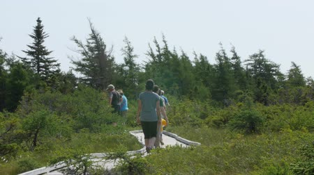 cape breton : A family walking through highlands national park Stock Footage