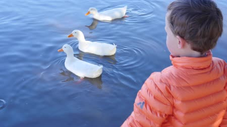 feed on : A little boy feeds ducks at the park