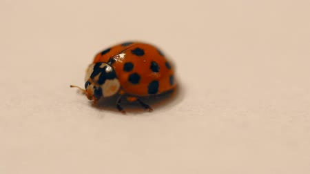 A macro shot of lady bug