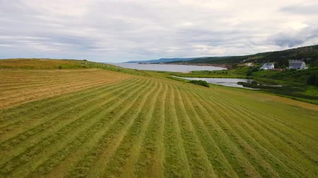 cape breton : Aerial farmer cuts the grass in field by ocean coastline