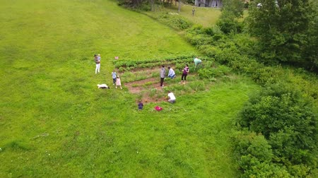 плодородный : Aerial shot of a family weeding the vegetable garden