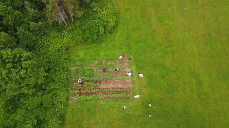 bahçıvan : Aerial shot of family in a vegetable garden