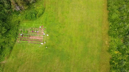 плодородный : Aerial shot of family in vegetable garden Стоковые видеозаписи