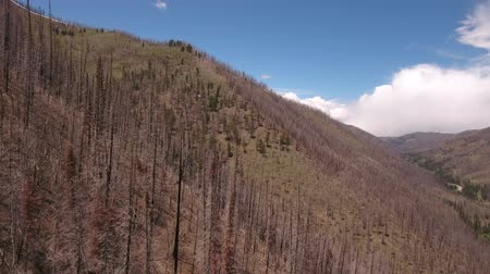 catástrofe : Aerial shot of flying over mountain after wildfire