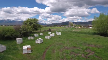 hive : Aerial shot of flying over the bee boxes in a field