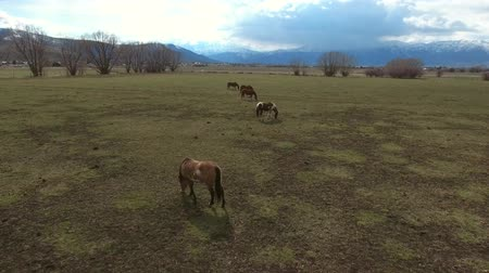 égua : Aerial shot of herd of horses standing in a field and mountains