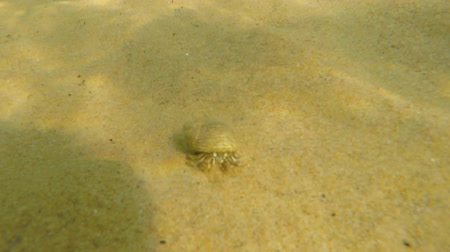 омар : An underwater shot of ocean sand crab walking in sand on beach Стоковые видеозаписи
