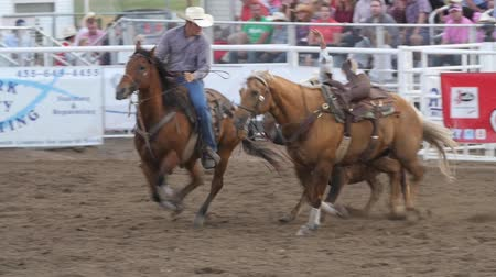 cauda : Editorial a cowboy misses steer wrestling in PRCA rodeo event Stock Footage