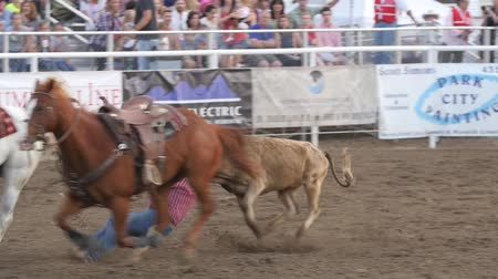 арена : Editorial a cowboy misses steer wrestling in PRCA rodeo event slow motion Стоковые видеозаписи