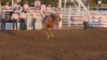 арена : Editorial A Cowboy rides bareback in PRCA rodeo event