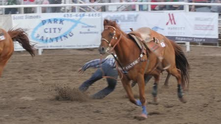 cauda : Editorial cowboy misses steer wrestling in PRCA rodeo event