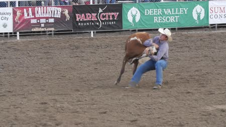 арена : Editorial cowboy steer wrestling in PRCA rodeo event