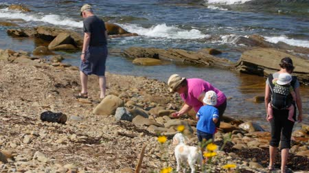 cape breton : Family walking on rocky beach Stock Footage