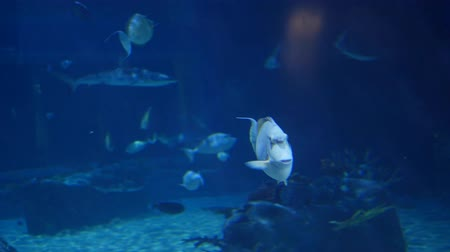 ploutve : Fish swimming through large aquarium