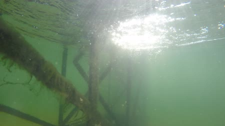 ловушка : Freshwater crawdad in a underwater metal trap in lake