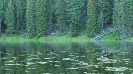 komar : Gorgeous reflection in the mountain lake water with bugs Wideo