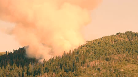 silvicultura : Huge mountain wildfire and smoke