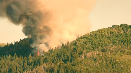 silvicultura : Huge mountain wildfire with smoke on a summer day