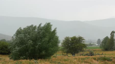 refraksiyon : Large trees blowing in the wind and rain in field