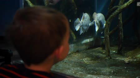 ploutve : Little boy watcing fish swim in aquarium Dostupné videozáznamy