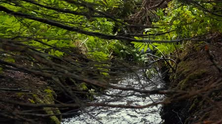 movements : Slow Motion of beautiful stream running through green forest