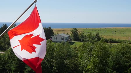 flaga : Slow motion of canadian flag in the wind