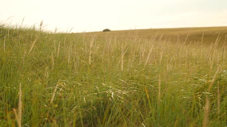 trawa : Slow motion shot of grass blowing in wind on hillside