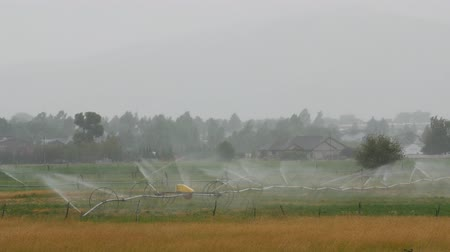 irrigate : Sprinklers watering a field during rain storm Stock Footage