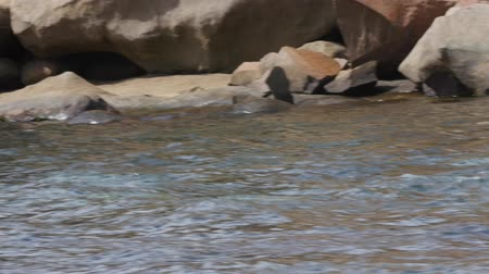 kürk : Tons of seal swimming by the boat in the wild Stok Video