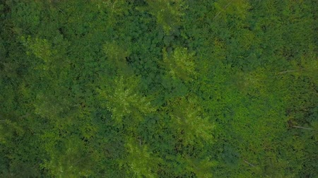 Aerial drone shot of a forest