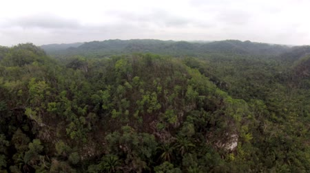 amazonka : Tropical jungle aerial pan in Belize