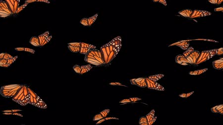 owady : Monarch Butterfly Swarm (HD).This is a complex animation made with hi res animated to resemble flying realistic butterflies.Wings not only flutter but bend as they stroke as if the wind was moving them Wideo