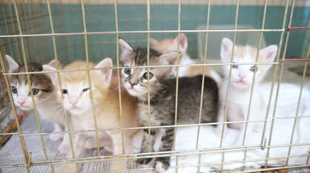 kotki : Several kittens in a litter or kindle behind a cage.