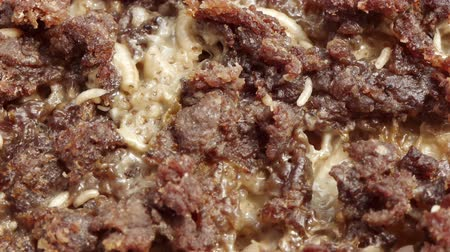 decomposition : Fly Larvae On Meat