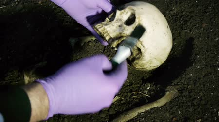 crânio : Take Skull Tilted while excavating Human Bones with Wide Brush. For Paleontology or Police Crime Scene Videos. All Fake Ceramic Bones.