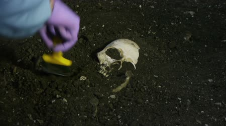 pincel : Excavating Human Bones with Wide Brush. For Paleontology or Police Crime Scene Videos. All Fake Ceramic Bones.