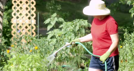 kertészet : Mid-aged woman, working in her garden. Woman planting, digging and watering various plants and flowers. Ultra HD 4K Stock mozgókép