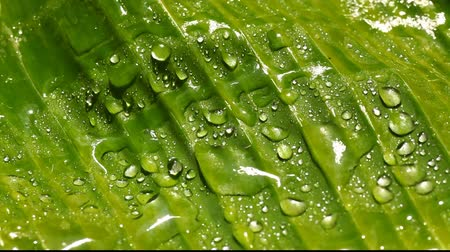 Water drops on leaf surface Wideo