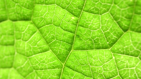 botanik : Macro shot of green leafs and plants been analyzed